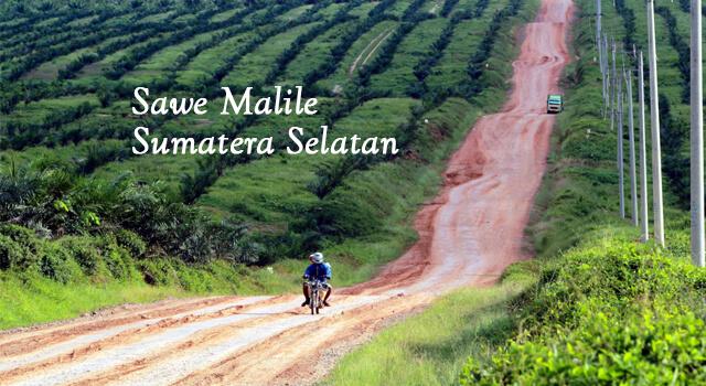 lirik sawe malile sumatera selatan