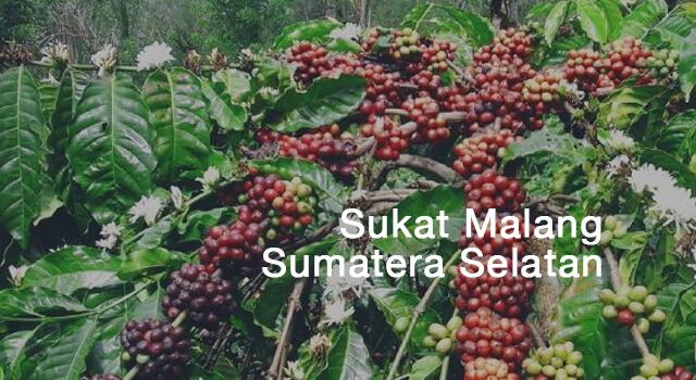 lirik sukat malang sumatera selatan